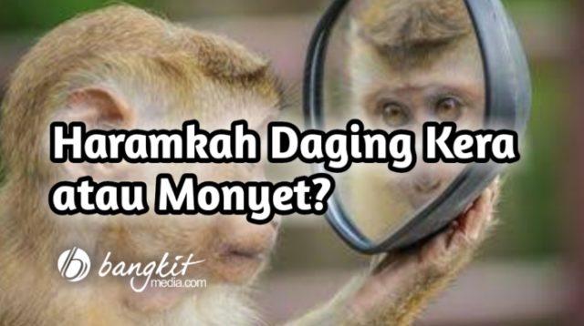Haramkah Daging Kera atau Monyet?