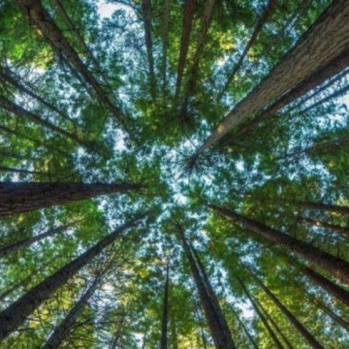 Status Anak Pohon yang Tumbuh Setelah Pohonnya Terjual